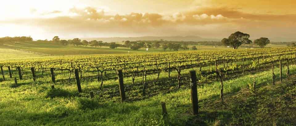 Sterling Vineyards at Calistoga