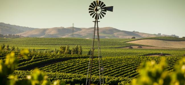 Escape to Wine Country 2